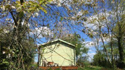 de blokhut van de achterkant gezien, op de voorgrond bloesem van de kersenboom